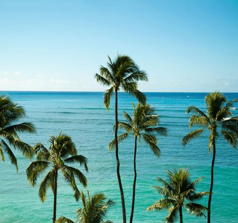 ハワイウエディング/ハワイ挙式/ハワイ結婚式はリアルウェディングスへ!